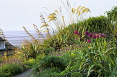 Path through coastal garden, lavender, sage, alliums, santolina, Cortaderia selloana, phormiums, view over bay