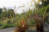 Paved terrace overlooking bay, phormiums, Cortaderia selloana