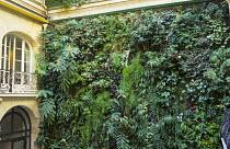 Vertical garden, living wall