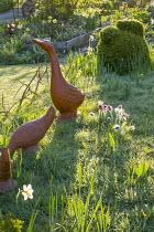 Pulsatilla vulgaris naturalised in lawn by duck ornaments