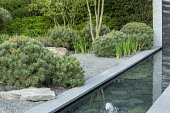 Slate paddlestones in formal pool edged with grey Yorkstone paving, basalt granite gravel chippings, cloud-pruned Pinus sylvestris 'Watereri'