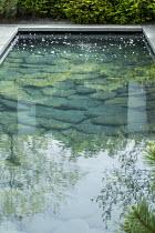 Slate paddlestones in grey Yorkstone-edged pool