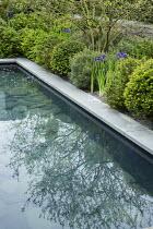 Iris sibirica 'Blue King', Pinus sylvestris 'Watereri', grey Yorkstone paving around formal pool with slate paddlestones