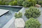 Formal pool with slate paddlestones and grey Yorkstone paved edging, basalt granite gravel chippings, Pinus sylvestris 'Watereri', rock