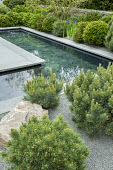 Formal pool with slate paddlestones and grey Yorkstone paved edging, basalt granite gravel chippings, cloud-pruned Pinus sylvestris 'Watereri' and Pinus sylvestris, Iris sibirica 'Blue King'