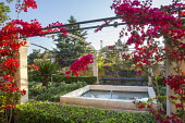 Bougainvillea climbing over pergola, Pittosporum tobira hedges, formal pool and fountain