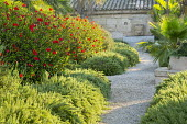 Rosemary edging gravel path, Hibiscus rosa-sinensis
