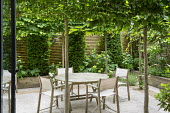 Table and chairs on travertine patio edged with gravel within pleached hornbeam enclosure, yew columns, Hydrangea arborescens 'Annabelle'