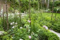 Deschampsia cespitosa 'Goldschleier', Rosa 'Scarborough Fair', Alchemilla mollis and Hebe rakiensis in Malus x robusta 'Red Sentinel' grove