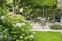 Hydrangea macrophylla 'Madame Emile Mouillère', table and chairs in pleached tree enclosure, Erigeron karvinskianus, Lavandula angustifolia 'Hidcote'
