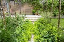 Path edged with Alchemilla mollis through Malus x robusta 'Red Sentinel' grove, Deschampsia cespitosa 'Goldschleier'