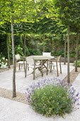 Table and chairs on travertine patio edged with gravel within pleached hornbeam enclosure, Lavandula angustifolia 'Hidcote', yew columns, Hydrangea arborescens 'Annabelle'