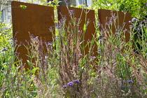 Cor-ten steel wall in border, Verbena bonariensis, Calamagrostis x acutiflora 'Karl Foerster'