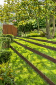 Grass steps with cor-ten steel risers under magnolia