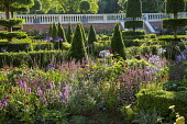 View across border towards formal parterre, yew hedges, pyramids and topiary, balustraded wall, Salvia nemorosa 'Caradonna'