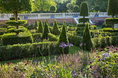 Overview across formal parterre, yew hedges, pyramids and topiary
