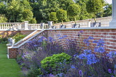 Brick wall, stone balustrade, Agapanthus 'Castle of Mey', Salvia nemorosa 'Caradonna'