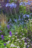 Agapanthus 'Castle of Mey', Stachys officinalis 'Hummelo', Salvia nemorosa 'Caradonna', Nepeta racemosa 'Walker's Low'
