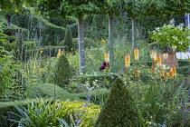 Box topiary pyramids in formal box parterre in pleached hornbeam enclosure, Kniphofia rooperi, Hydrangea paniculata 'Tardiva' in terracotta urn, Verbena macdougalii 'Lavender Spires'