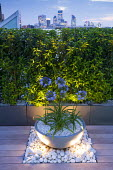 Agapanthus in container on roof terrace lit at night, white pebble mulch