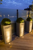 Clipped yew domes in tall containers, glass screens