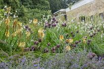 Kniphofia 'Tawny King', Gaura lindheimeri, Allium sphaerocephalon