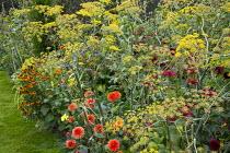 Dahlia 'Gold Nugget', Foeniculum vulgare, Helenium 'Moerheim Beauty'