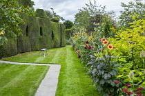 Dahlia 'Nuit d'Eté', Dahlia 'Happy Single Date', Dipsacus fullonum, topiarised yew hedge, rustic wooden bench on lawn