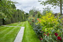 Dahlia 'Nuit d'Eté', Dahlia 'Happy Single Date', topiarised yew hedge, rustic wooden bench on lawn