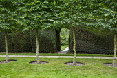 Lawn edged with row of Carpinus betulus 'Fastigiata', archway in clipped yew hedge
