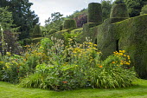 Foeniculum vulgare, Achillea filipendulina 'Cloth of Gold', Hemerocallis 'Mauna Loa', topiarised yew hedge, Dipsacus fullonum