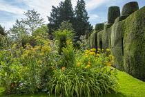 Foeniculum vulgare, Achillea filipendulina 'Cloth of Gold', Hemerocallis 'Mauna Loa', Dipsacus fullonum, topiarised yew hedge