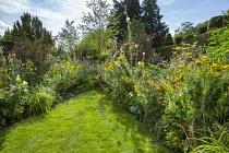 Triangular lawn, Dipsacus fullonum, Foeniculum vulgare, Achillea filipendulina 'Cloth of Gold'