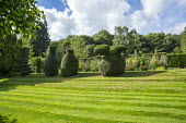 Yew topiary on terraced grass bank