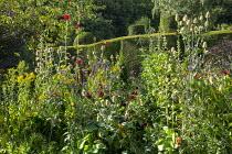 Dahlia 'Dark Spirit', alcea, Dipscaus fullonum, topiarised yew hedge