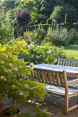 Table and benches on patio, Hydrangea quercifolia, Dahlia 'Cactus White Star', topiarised yew hedge