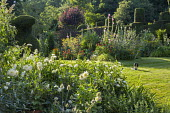 Dahlia 'Cactus White Star', yew topiary and topiarised hedge, fennel and hollyhocks in border, dog on lawn