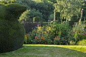 Yew topiary on terraced lawn, Dahlia 'Golden Nugget', Foeniculum vulgare and hollyhocks in border, topiarised yew hedge