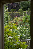 View from inside to bench on patio outside, Hydrangea quercifolia, Dahlia 'Cactus White Star', Foeniculum vulgare, alcea, Dahlia 'Gold Nugget' and 'Natal'