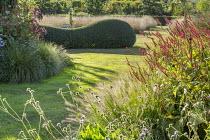 Grass path, Pennisetum alopecuroides 'Gelbstiel', Persicaria amplexicaulis 'Firedance', Knautia godetii, ligustrum hedge
