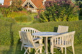 Wooden table and chairs on lawn by clipped privet hedge, Eupatorium maculatum (Atropurpureum Group) 'Riesenschirm'