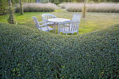 Wooden table and chairs on lawn by clipped privet hedge