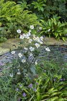 Anemone x hybrida 'Honorine Jobert', Verbena bonariensis, Asplenium scolopendrium, stone raised bed, Cyrtomium fortunei