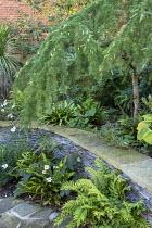 Stone raised bed, Asplenium scolopendrium, Cyrtomium fortunei