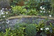 Anemone x hybrida 'Honorine Jobert', Verbena bonariensis, stone raised bed, Asplenium scolopendrium, clipped box ball, Cyrtomium fortunei
