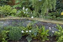 Anemone x hybrida 'Honorine Jobert', Verbena bonariensis, stone raised bed, Asplenium scolopendrium, box ball, Cyrtomium fortunei