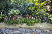 Persicaria affinis 'Darjeeling Red' in stone raised bed, hosta in container, Fatsia japonica, ivy climbing over fence