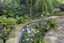 Stone raised bed, Anemone x hybrida 'Honorine Jobert', Verbena bonariensis, Asplenium scolopendrium, Cyrtomium fortunei