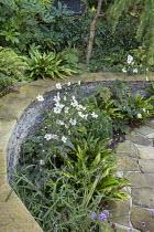 Stone raised bed, Anemone x hybrida 'Honorine Jobert', Verbena bonariensis, Asplenium scolopendrium