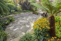 Crazy paving patio, stone raised beds, Dicksonia antarctica, Rudbeckia fulgida var. sullivantii 'Goldsturm', Asplenium scolopendrium